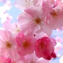 Music of spring